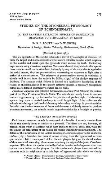 studies on the myoneural physiology of echinodermata