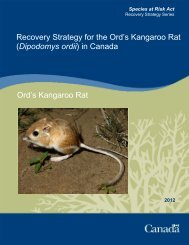 Ord's Kangaroo Rat (Dipodomys ordii) - Publications du ...