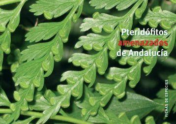 LIBRO HELECHOS.indd - Junta de Andalucía