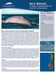 BLUE WHALES, - WWF