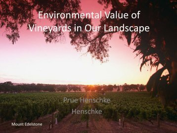 Environmental Value of Vineyards in Our Landscape
