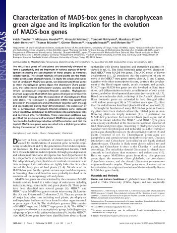 Characterization of MADS-box genes in charophycean green algae ...
