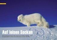 Auf leisen Socken - Polar-Reisen.ch