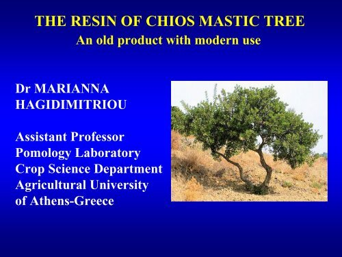 THE RESIN OF CHIOS MASTIC TREE