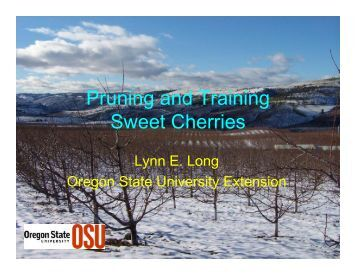 Pruning and Training Sweet Cherries - Oregon State University ...