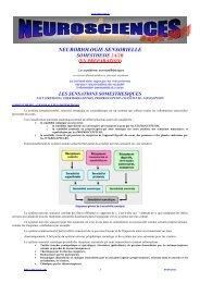 Neurobiologie sensorielle 2 (sept..2011) - Neur-one