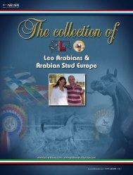 Leo Arabians & Arabian Stud Europe - tutto arabi