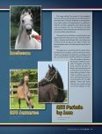 Leo Arabians & Arabian Stud Europe - tutto arabi - Page 5