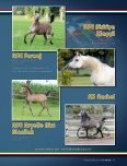 Leo Arabians & Arabian Stud Europe - tutto arabi - Page 7