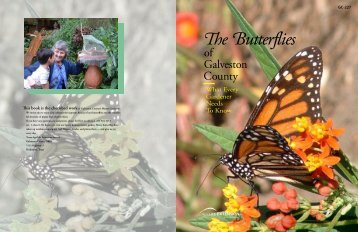 The Butterflies of Galveston County - Aggie Horticulture - Texas A&M ...