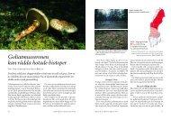 Goliatmusseronen kan rädda hotade biotoper - Natur & Trädgård