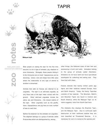 Tapir - Zoos South Australia