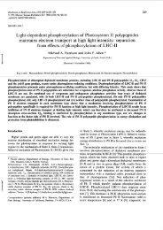 Biochimica et Biophysics Acta, 1058 (1991) - John F. Allen