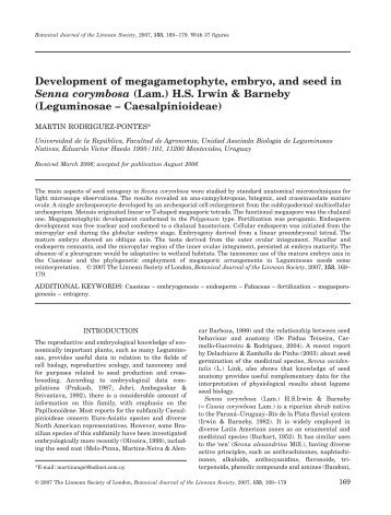 Development of megagametophyte, embryo, and seed in Senna ...