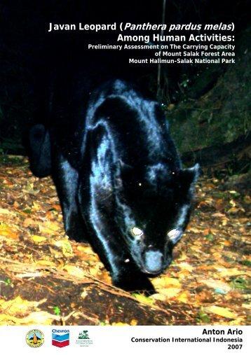 The Javan Leopard (Panthera pardus melas) Among ... - wild-cat.org