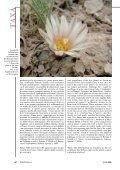 alberto-vojtechii - Lophophora.info - Page 3