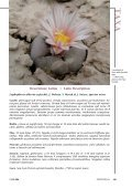 alberto-vojtechii - Lophophora.info - Page 4