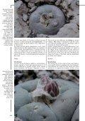 alberto-vojtechii - Lophophora.info - Page 7