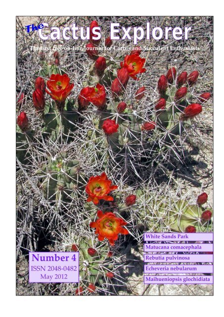 thelocactus panarottoanus Cactus Cacti Succulent Real Live Plant