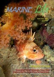 MaRine - Tasmanian University Dive Club