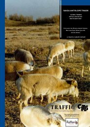 Saiga Antelope Trade: Global trends with a focus on South-East ...