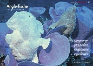 Anglerfische - Taucher Revue