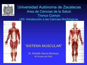 sistema muscular - UAZ