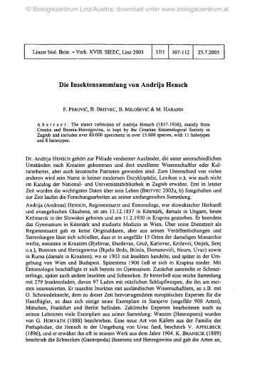 Die Insektensammlung von Andrija Hensch