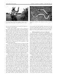 Iguana b&w text - International Reptile Conservation Foundation - Page 7