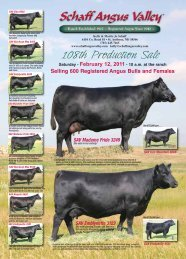 108th Production Sale - Schaff Angus Valley