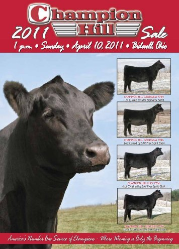Champion Hill Georgina 7759 - Angus Journal