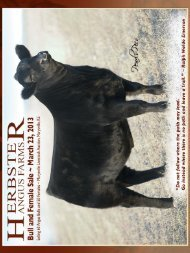 click here for our 2013 bull sale catalog - Herbster Angus Farms