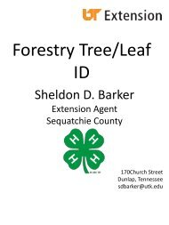 Forestry Tree/Leaf ID - UT Extension - The University of Tennessee
