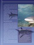 Monitoramento evita ataques de tubarão - Finep - Page 4
