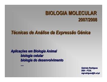 Hibridação in situ (mRNA) - Biologia Molecular e Genética