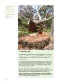 conexões de primeira classe - Environmental Investigation Agency - Page 4