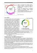 Cap. 3.1 Vectori utilizaţi în clonarea genetică la - Page 2