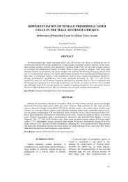differentiation of female primordial germ cells in the male testes of ...