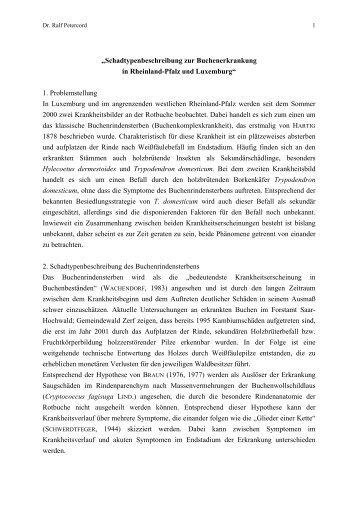 PDF ca. 1,3 MB