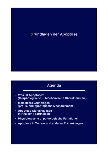 Grundlagen der Apoptose Agenda