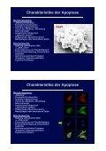Grundlagen der Apoptose Agenda - Seite 3