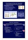 Grundlagen der Apoptose Agenda - Seite 6