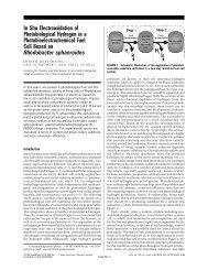 In Situ Electrooxidation of Photobiological Hydrogen in a ...