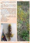 Folha Viva - Universidade de Coimbra - Page 7