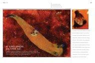 AS SUPER IMAGENS DAS FOTOS SUB - Revista Linha Verde