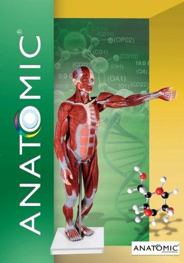 Baixar - Anatomic