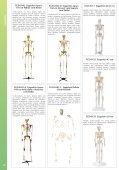 Baixar - Anatomic - Page 2