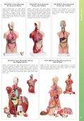 Baixar - Anatomic - Page 7