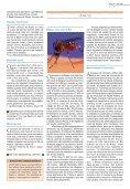 Radis - Fiocruz - Page 5