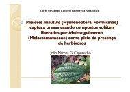 Pheidole minutula (Hymenoptera Hymenoptera ... - PDBFF
